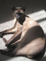 Jens the Tonkinese